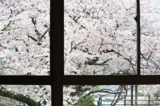 桜の季節 お花見のご予約を承っております。